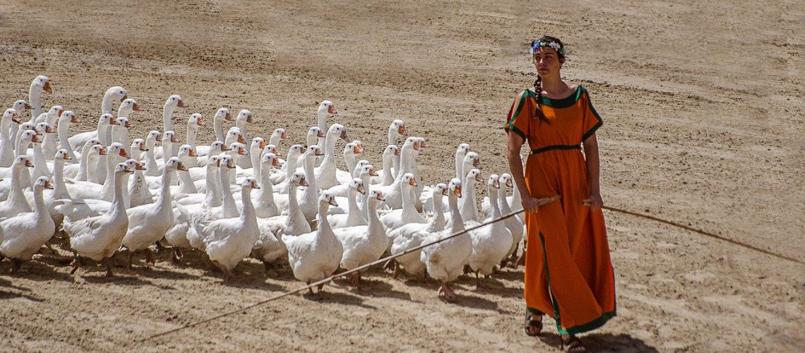 Young woman leading a gaggle of geese.